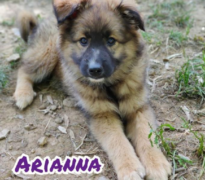 Arianna cucciola cerca ???? rimini - adozione cani e gatti