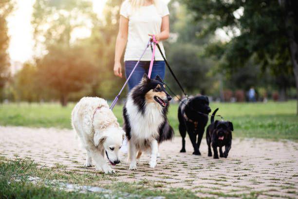 Cerco lavoro pet sitter, baby sitter per animali