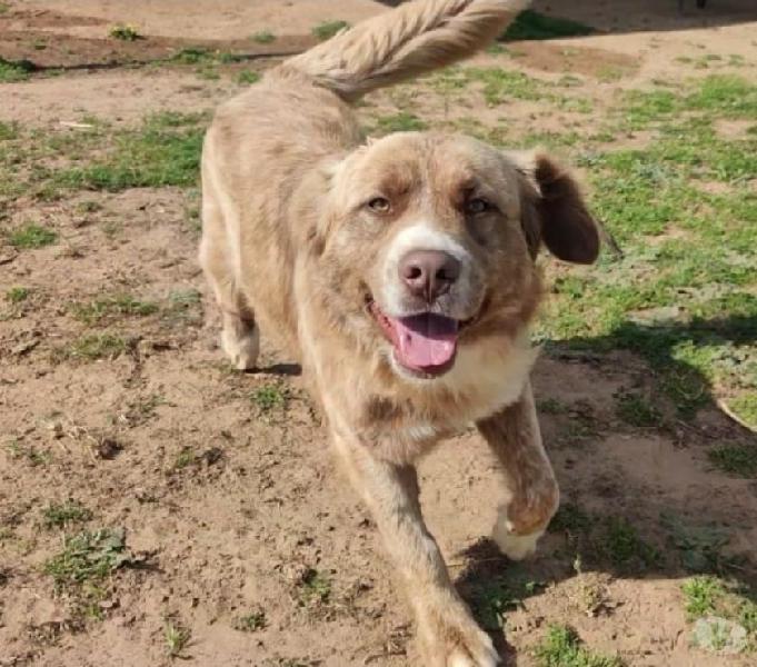 Leone - la bellezza fatta cane roma - adozione cani e gatti