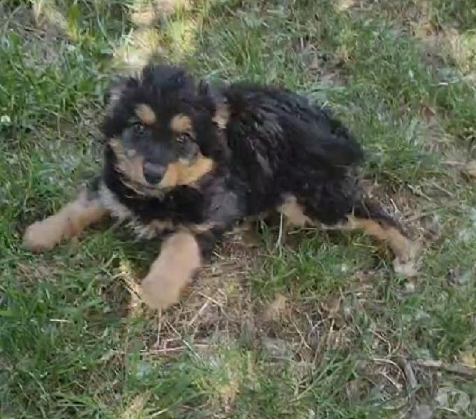 Cucciola taglia piccola genova - adozione cani e gatti