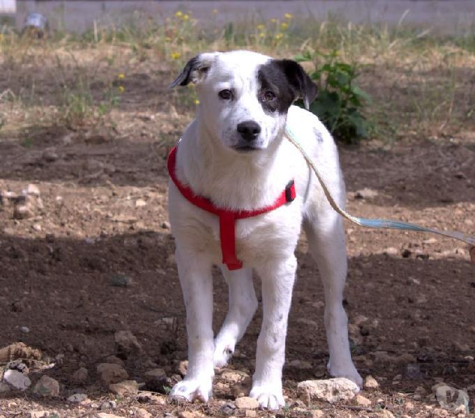 Peter cerca casa trieste - adozione cani e gatti