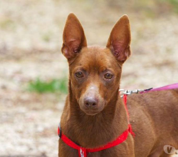 Speedy cerca casa bologna - adozione cani e gatti