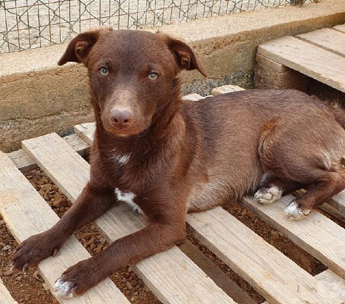 Biscotto,taglia medio piccola,in adozione dal canile...... padova - adozione cani e gatti