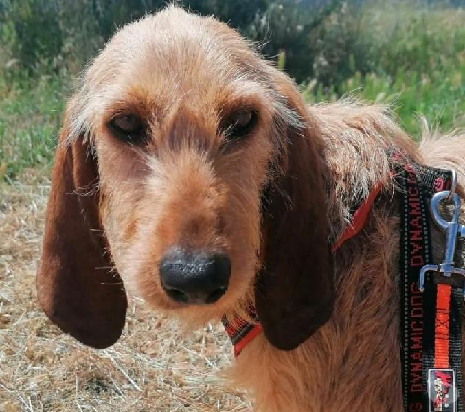 Flavia,abbandonata con le sue cucciole savona - adozione cani e gatti