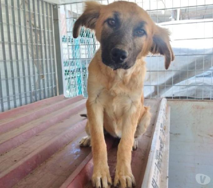 Dolce cucciola coco in regalo in tutta italia catania - adozione cani e gatti