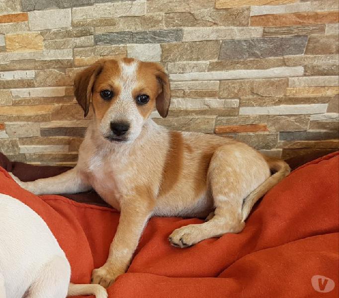Cucciolo taglia piccola cerca adozione genova - adozione cani e gatti