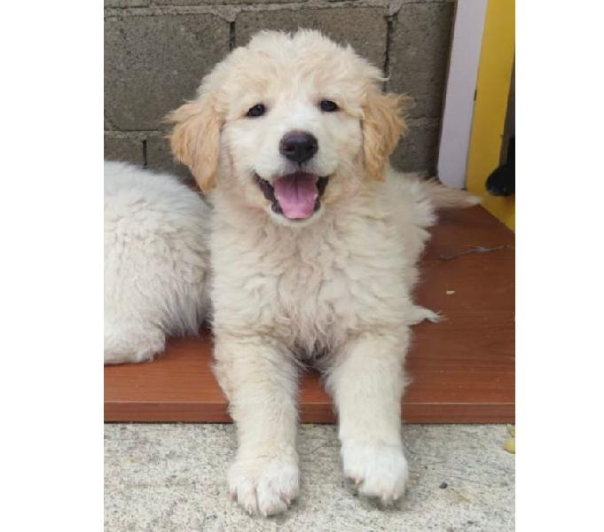 Dolce cucciola cerca casa padova - adozione cani e gatti