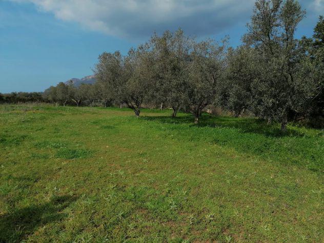 Terreno Agricolo a Partinico