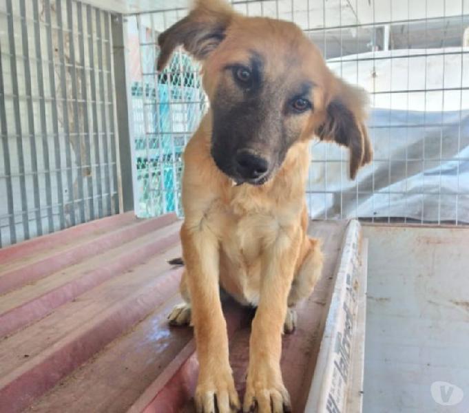 Dolce cucciola coco' in regalo milano - adozione cani e gatti
