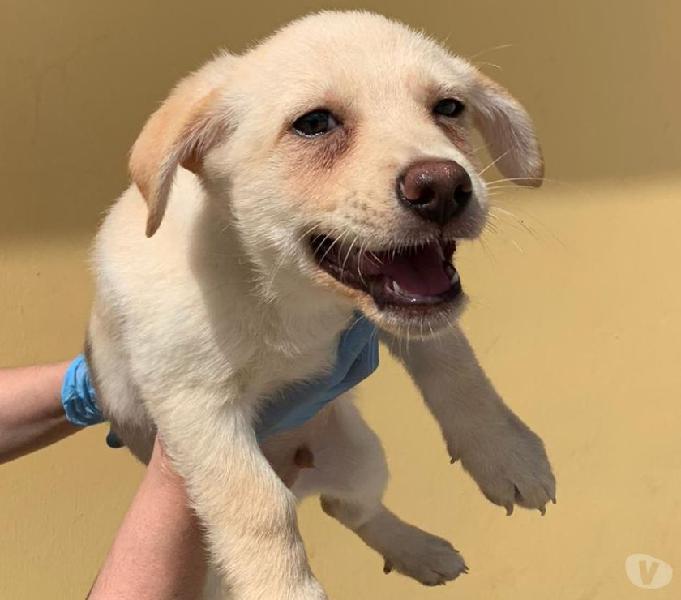 Adozione cucciolo taglia piccola brescia - adozione cani e gatti