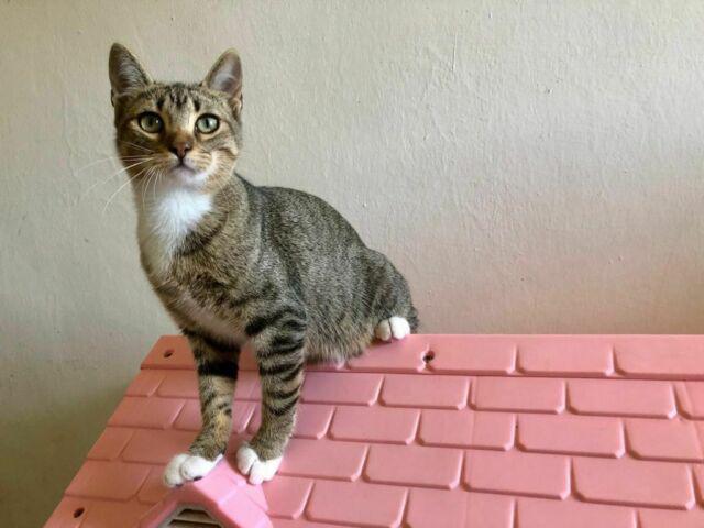 Una casa per questa gattina
