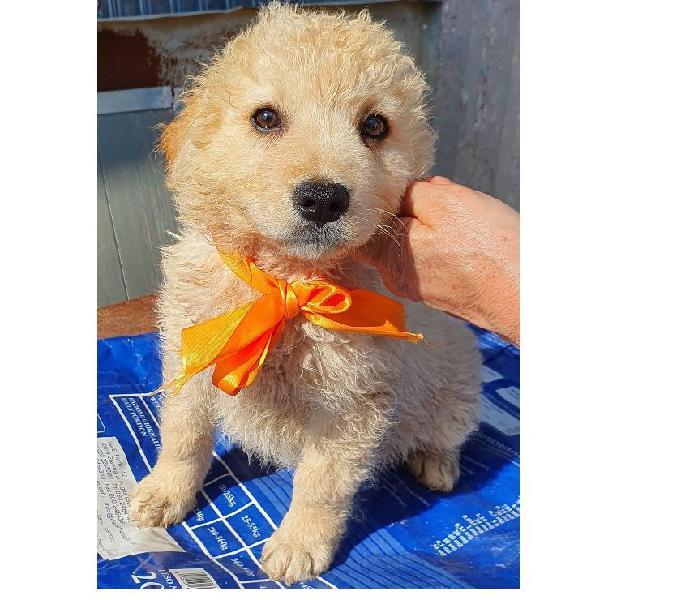 Non comprare,adotta birba dal canile! padova - adozione cani e gatti