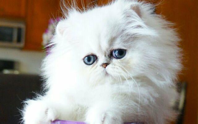 Cat sitter al vostro domicilio