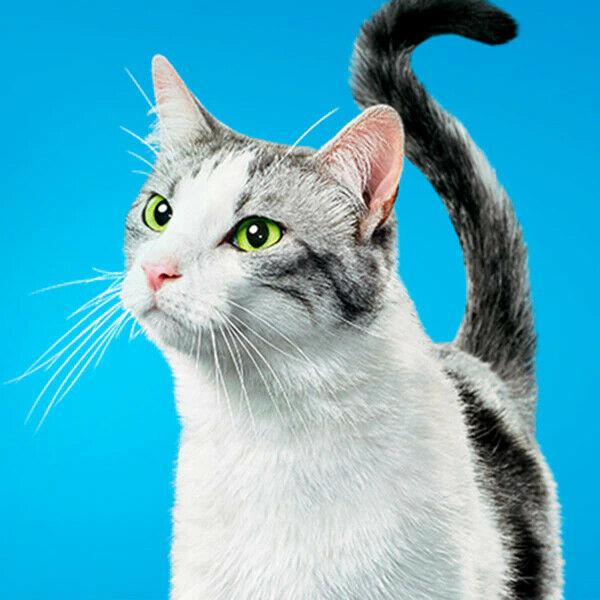Cat sitter (cura gatti) e cura piante in citta di vicenza