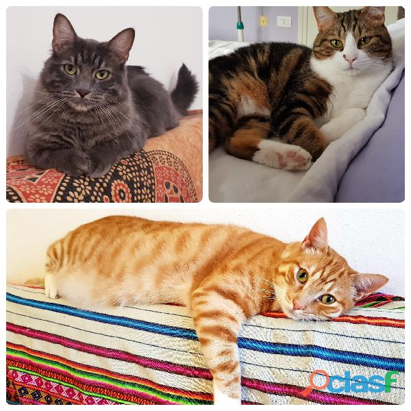Cat sitter e pensione casalinga voghera (pv)