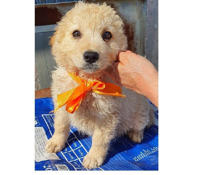 Non comprare,adotta birba dal canile! trento - adozione cani e gatti