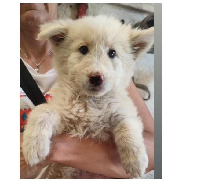 Cloe, dolce cucciola taglia media cerca casa genova - adozione cani e gatti