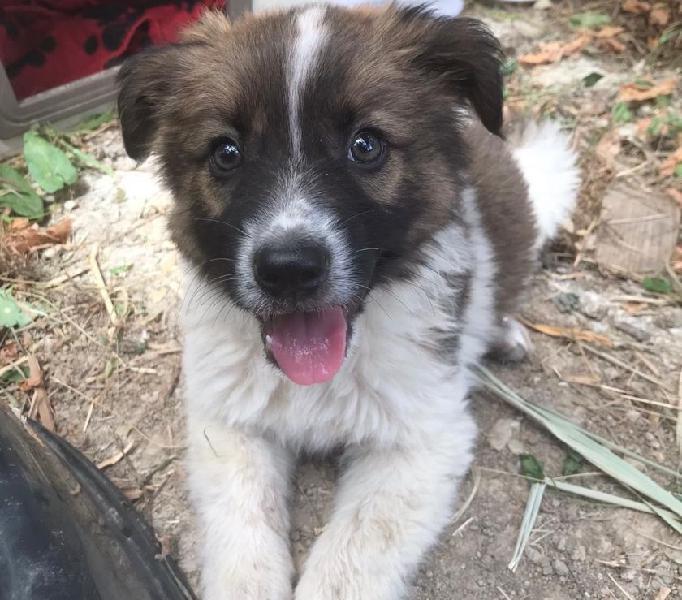 Cucciolo cerca casa pisa - adozione cani e gatti