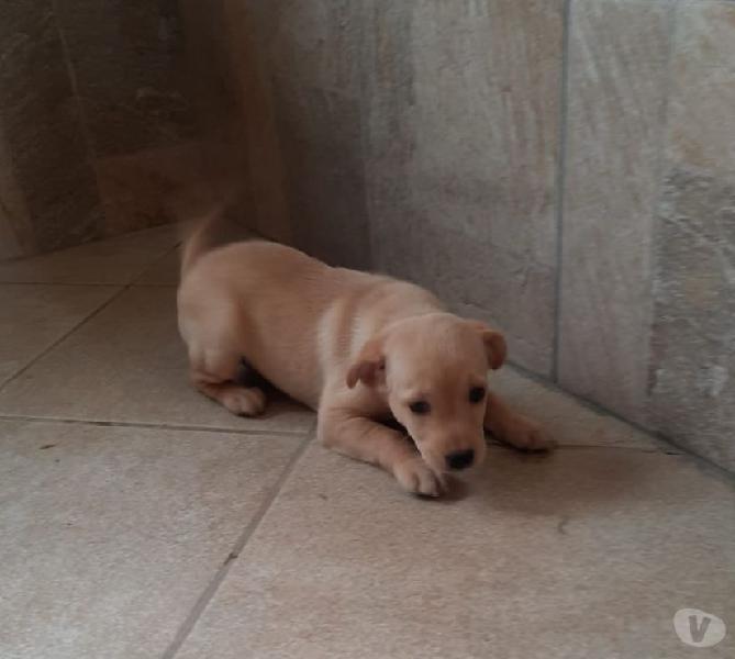Dasha: 2 mesi taglia media Genova - Adozione cani e gatti