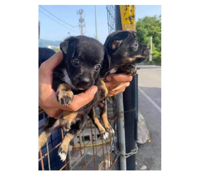 Cuccioli piccola taglia milano - adozione cani e gatti