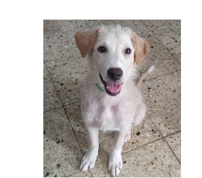 Patty, cucciola taglia medio contenuta padova - adozione cani e gatti