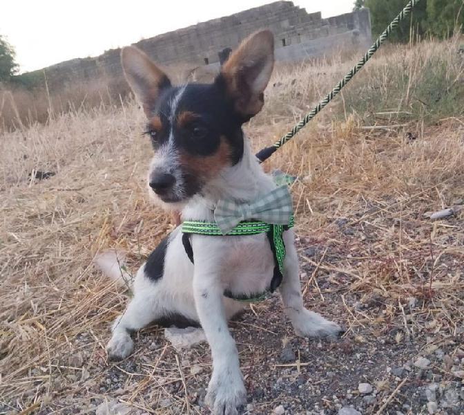 Luigi: 5 mesi taglia piccola. cerca adozione o stallo genova - adozione cani e gatti