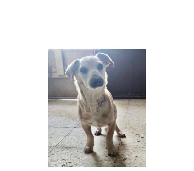 7anni kg8 cieco adozione del cuorex franco!calabria sos milano - adozione cani e gatti