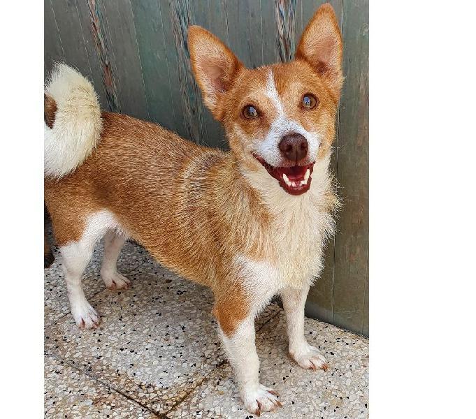 Dory,taglia piccola,in adozione dal canile! padova - adozione cani e gatti