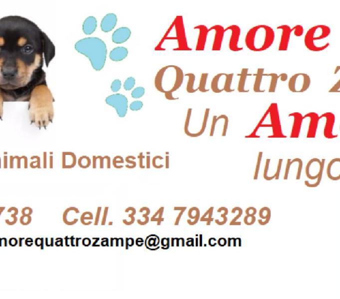 """Cremazione animali domestici """" amore @ quattro zampe """" la spezia - prodotti e servizi per animali"""