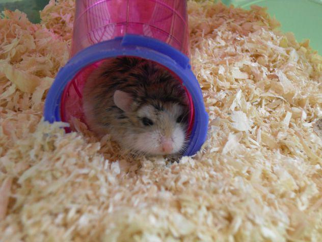 Pensione casalinga solo per piccoli animali