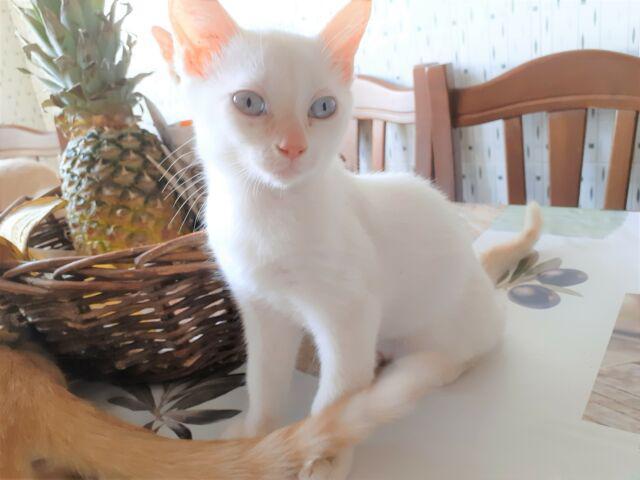 Gattini di tre mesi di progenie rossa