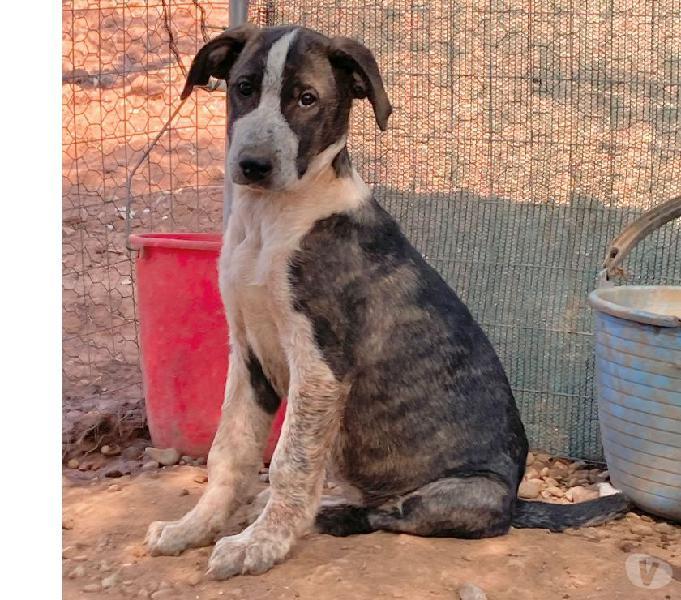 Cucciolona in regalo milano - adozione cani e gatti