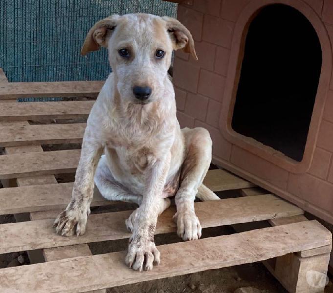 Cucciolona bellissima roma - adozione cani e gatti