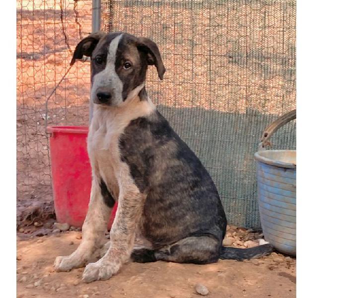 Cucciolona in regalo trento - adozione cani e gatti
