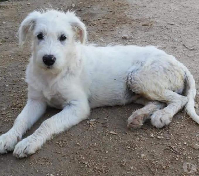 Aisha: splendida cucciolona taglia medio grande genova - adozione cani e gatti