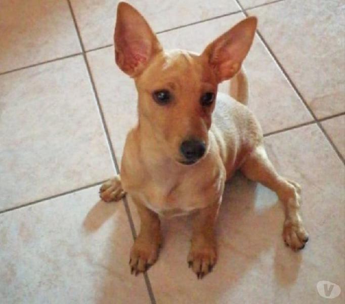 Lola: cucciola taglia piccola cerca nuova famiglia genova - adozione cani e gatti
