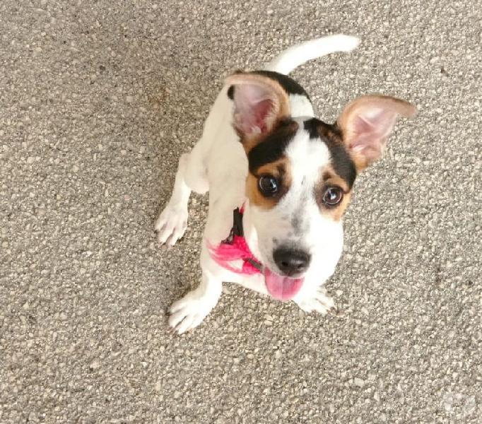 Mirtilla: 4 mesi taglia piccola. cerca nuova famiglia genova - adozione cani e gatti