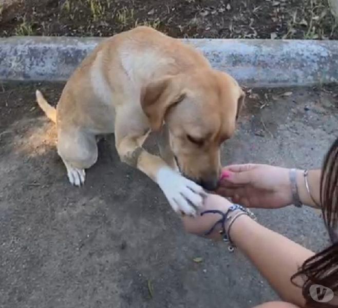 Laila: cucciolona taglia media cerca adozione o stallo genova - adozione cani e gatti