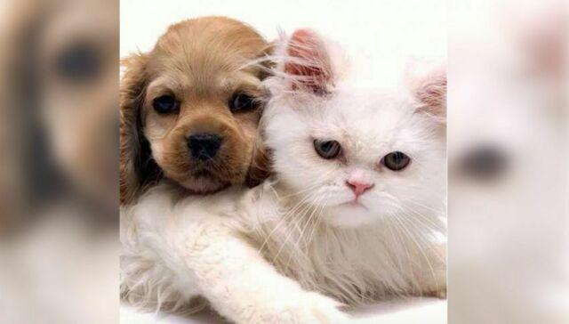 Pensione cani di piccola taglia/gatti