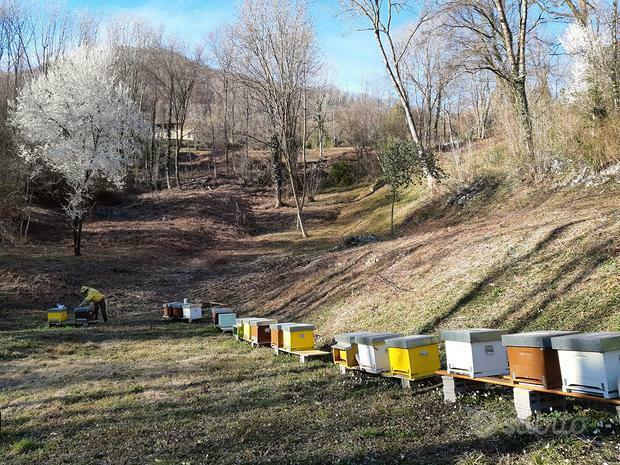 Porzione di terreno per apicoltore