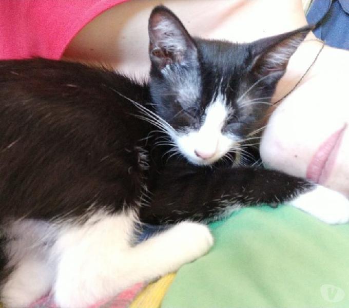 Kika: cucciola affettuosa e socievole Genova - Adozione cani e gatti