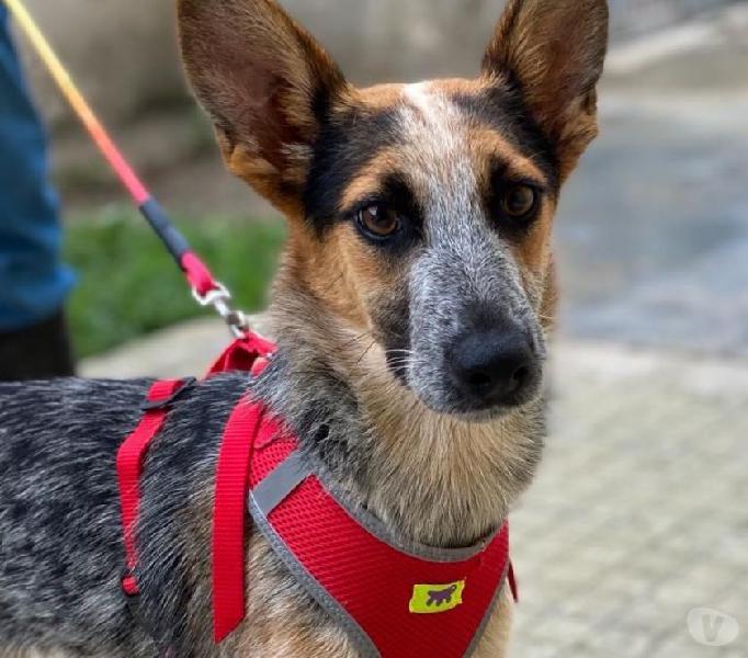 Pasticcio, Polenta e Pizzico in adozione Padova - Adozione cani e gatti
