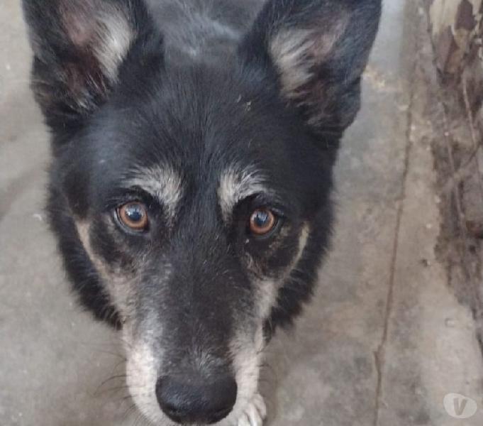 Willy, dolcissimo cucciolone pieno di vita e amorevole La Spezia - Adozione cani e gatti