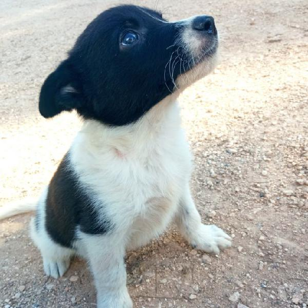 Cuccioli di taglia medio piccola e media in cerca di amore verona - adozione cani e gatti