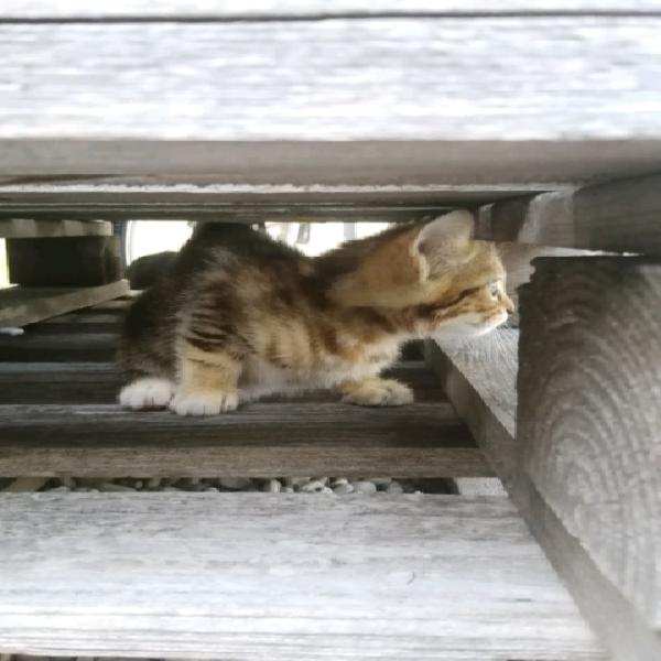 Dolce gattina