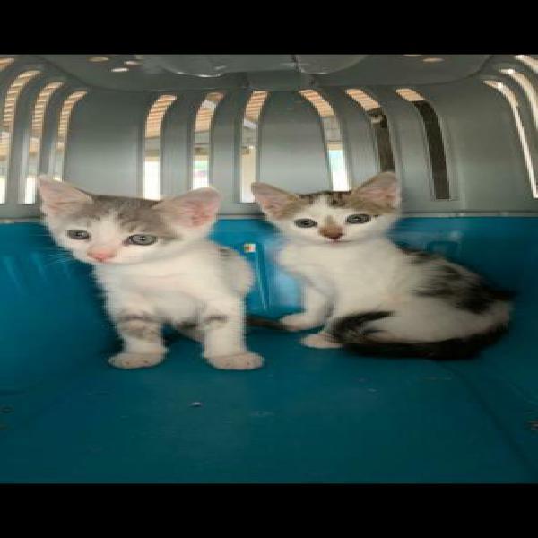 Cip e ciop gattini di 2 mesi