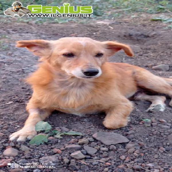 Liam, cagnolino di 3 anni, taglia medio/piccola, 12 kg