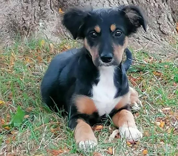 Lilly: 4 mesi taglia contenuta Genova - Adozione cani e gatti