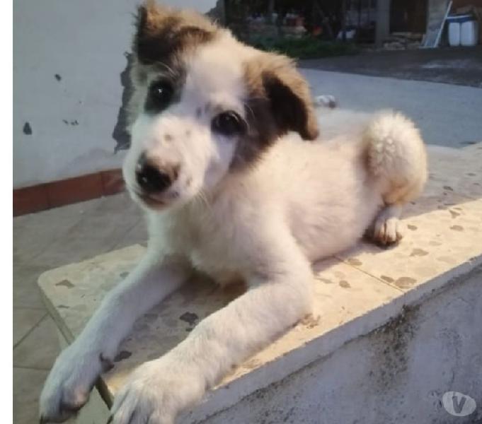stupendi cuccioli in regalo Bologna - Adozione cani e gatti