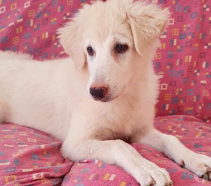 Carolina, dolce cucciola di 4 mesi siena - adozione cani e gatti